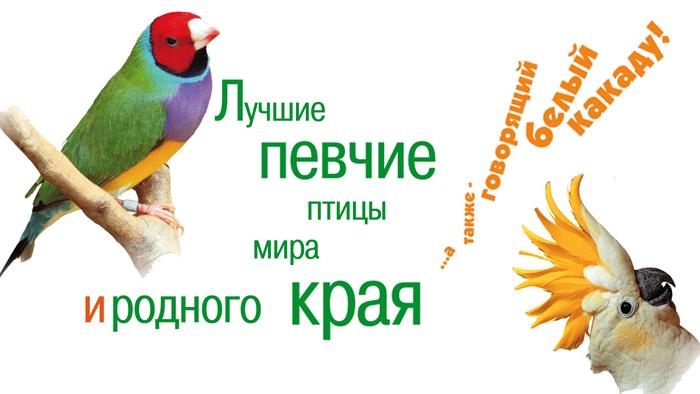 Картинки по запросу певчие птицы выставка